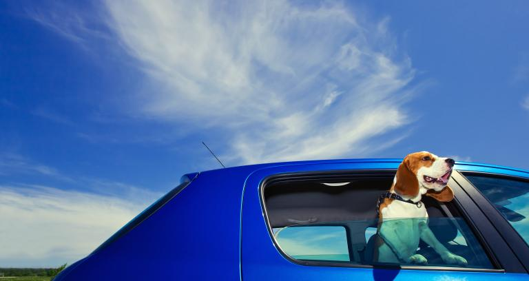 A beagle with its head out of a blue car window against a blue sky