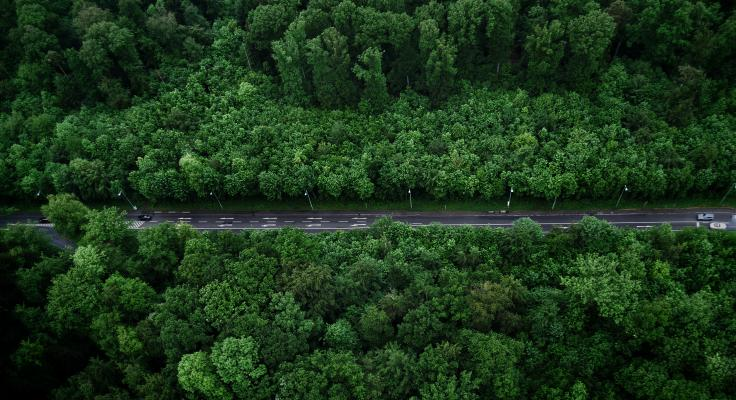 Birds-eye view of road in forested area.